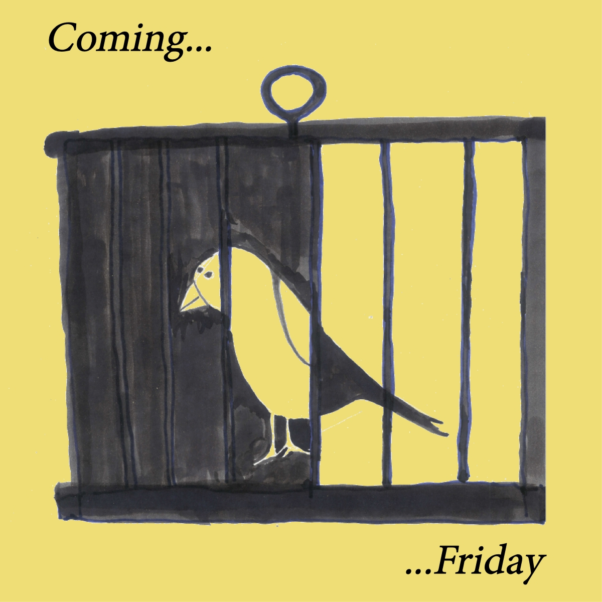 Drawing of a canary in the cage. Text: Coming... Friday